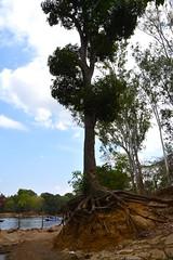 DSC_0182_2 (drs.sarajevo) Tags: india karnataka madikeri kaveririver dubareelephantpark