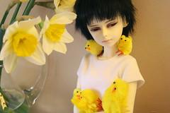 Chicks :O (Kafersface) Tags: chicks bjd luts padma mydolls shiwoo shiwoogirl