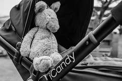 100 ~ 365 (BGDL) Tags: blackandwhite monochrome garden 365 buggy pram softtoy weeklytheme icandy nikond7000 bgdl lightroom5 afsmicronikkor40mm128g flickrlounge somethingbeginningwiththeletterp