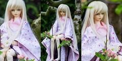 More Miko (Uke-Pa-Chan) Tags: ball doll fei bjd abjd dz jointed dollzone