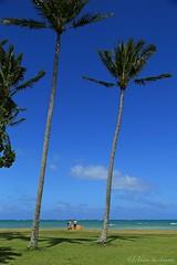 04172015_007_ (ALOHA de HAWAII) Tags: hawaii oahu kualoaregionalpark tallpalmtreebluesky