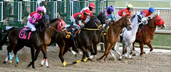 "2015-01-02 (120) r9 and they're offf (JLeeFleenor) Tags: photos photography md marylandracing laurelpark jockey جُوكِي ""赛马骑师"" jinete ""競馬騎手"" dżokej jocheu คนขี่ม้าแข่ง jóquei žokej kilparatsastaja rennreiter fantino ""경마 기수"" жокей jokey người horses thoroughbreds equine equestrian cheval cavalo cavallo cavall caballo pferd paard perd hevonen hest hestur cal kon konj beygir capall ceffyl cuddy yarraman faras alogo soos kuda uma pfeerd koin حصان кон 马 häst άλογο סוס घोड़ा 馬 koń лошадь maryland"