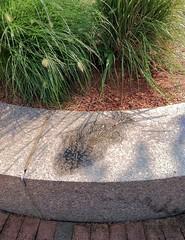 Traces (ArtFan70) Tags: cambridge sculpture usa fish art america ma fossil unitedstates massachusetts traces newengland relief miller raymond universitypark cambridgeport rossmiller monicaraymond