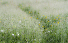 Early morning (DrScottA) Tags: osterleypark morninglight dew spring meadow flora outdoor field landscape serene calm