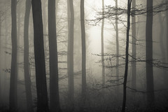 * (sedregh (on/off)) Tags: mist fog forest landscape nebel eifel landschaft wald