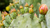 B36C6343 (WolfeMcKeel) Tags: park new city vacation cactus flower nature gardens garden mexico botanical spring high flora downtown desert landscaping albuquerque flowering 2016
