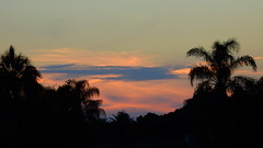 May 11th Sunset (Jim Mullhaupt) Tags: pictures camera pink blue sunset red wallpaper sky orange sun color tree weather silhouette yellow clouds landscape photography gold evening photo nikon flickr sundown florida dusk snapshot picture palm exotic p900 tropical coolpix bradenton geographic endofday cloudsstormssunsetssunrises nikoncoolpixp900 coolpixp900 nikonp900 jimmullhaupt