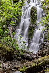 DSC09473.jpg (jjdun7) Tags: travel nature water oregon creek forest river landscape countryside waterfall stream lifestyle environment landforms 2016 2015 sardinecreek