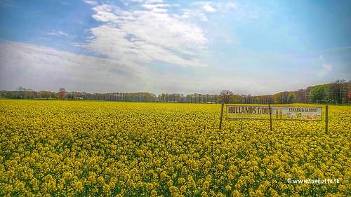Dutch Gold, Tasty and healthy, Vorden, Netherlands - 4221