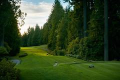 KPMG Women's PGA Championship (Golf Today) Tags: horizontal unitedstates golfcourse wa sammamish noperson