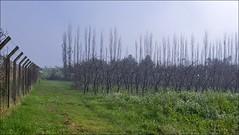 Manh de Inverno (Maz Parchen) Tags: inverno rvores relva paisagemdeinverno maz rvoressecas manhdeinverno mazparchen