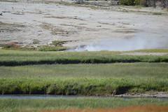 Island Geyser, Biscuit Basin (David A's Photos) Tags: island yellowstonenationalpark geyser yellowstonetrip biscuitbasin june2016