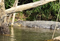 Crocodile : Northern territory : Australia (Aussie-Pete 4) Tags: