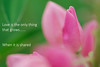 Love is the only thing that grows..... (pallab seth) Tags: park england flower macro london nature garden spring dof blossom bokeh outdoor petal bloom barking signofspring springgarden 2016 barkingpark samsungnx1 samsung60mmf28macroedoisssalens