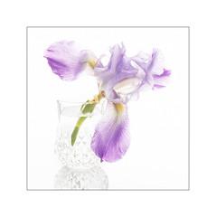 Purple Iris in Crystal (The Visioneer) Tags: iris stilllife shine purple crystal