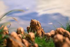 Mountain roots (frankshepherd2) Tags: depthoffield garden nature macro treeroots