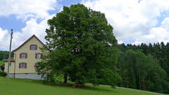 P1100926 (arborist.ch) Tags: tree baum treeclimbing arborist treecare baumpflege arboriculture