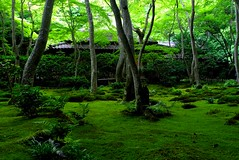 Green illuminated (tez-guitar) Tags: leica wood trees summer tree green forest garden temple moss kyoto leicax1