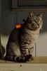 gato-1 (Tinico Jones) Tags: gato cat mace katu кот mačka котка gat kočka kat kass kissa chat katze γάτα macska köttur gatto kaķis katė мачка qattus katt kot pisică кіт cath קאַץ