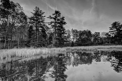 Mill Pond Dorchester (RubyD.11) Tags: trees mill nature birds lens landscape geese pond nikon angle wide canadian dorchester d7100