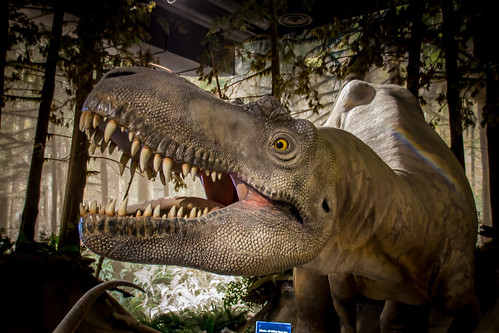 Welcome to Cretaceous Alberta