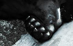 Medo II (Makro1) Tags: bear zoo europe serbia eurotrip belgrade beograd medo srbija evropa animalphotography travelphotography medved zver zivotinja belgradezoo