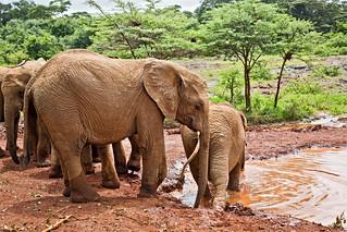 David Sheldrick Elephant Orphange 65