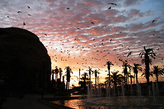 Atardecer en Arica / Chile (Leon Calquin) Tags: chile travel santiago sunset atardecer flickr photos north viajes leon fotos catalog diseo morro videos catalogo norte arica calquin leoncalquin quincal
