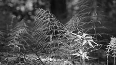 Brunn, Ingar (annesjoberg) Tags: summer blackandwhite monochrome blackwhite sony sommar vrmd ingar svartvitt brunn sonyphoto sonynex5t sonyphotograph