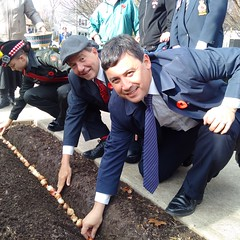 Michael plants tulips to commemorate the 70th anniversary of the Liberation of the Netherlands alongside Halton Hills Mayor Rick Bonnette and the Dutch Canadian Remembrance Committee in Georgetown (Photo courtesy of Ted Brown)