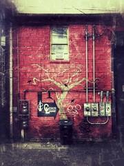 Cobra Lounge (Dale Brueggemann) Tags: red urban urbandecay bellingham alleys