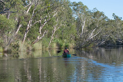 Quiet and Peaceful ( Jan van Dijk ) Tags: nature water quiet natuur peaceful australia canoe queensland paddling kano rivier noosariver puurnatuur noosarivereverglades