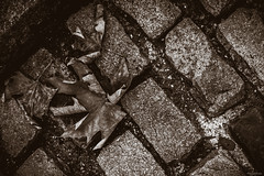 urban autumn (mosieKate) Tags: road autumn urban brick leaves bronze fallen bronzer