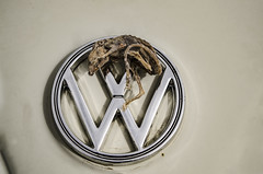 MausWagen (Stubble Jumper Photography) Tags: vw bug volkswagen dead skeleton mouse beetle 1960s mummy type1 mummified kafer