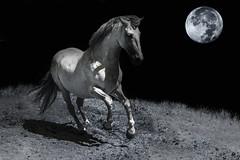 GALOPE NOCTURNO (alfrelopez) Tags: animal caballo noche luna alfredo nocturno equino galope nikon3200 sigma18200 alfrelopez
