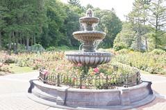 11856243_10153099687932076_3918359797965964126_o (jmac33208) Tags: park new york roses rose garden central schenectady