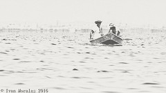 Guionistas. #tbt #afternoon #albufera #parque #natural #nature #naturelovers #valencia #life #summer #reflections #serenity #nature #naturelovers #bnw #b&w #byn #noir #black #blackandwhite #bnw_life #noir #sealife #fishing #boat #old (Ivalethia) Tags: bnwlife blackandwhite noir boat natural old afternoon serenity black valencia tbt bnw life sealife summer b nature parque naturelovers reflections albufera byn fishing