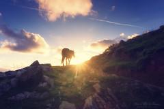Caballo al atardecer (Mimadeo) Tags: horse mountain sunset nature animal grass landscape equine sunlight sun beautiful vintage retro sunrays sunbeams path