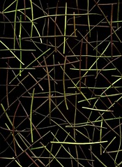 57448.01 Lamium galeobdolon (horticultural art) Tags: horticulturalart lamiumgaleobdolon lamium stems sticks random pattern