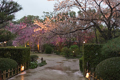 shukkeien (SanctyYumi) Tags: travel japan spring  cherryblossom  sakura