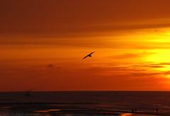 Belgian coast (Natali Antonovich) Tags: sunset sea reflection bird water seaside horizon northsea oostende seashore seasideresort belgiancoast seaboard