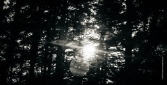 the light when the dawn is still dark. (imagomagia) Tags: trees sunset sun abstract art speed forest naturallight monocromatic nophotoshop fineartphotography blackandwhitephotography artphoto artphotography