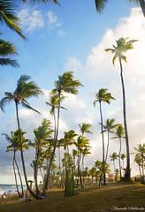 Villas do Atlntico - Lauro de Freitas - Bahia/Brasil (AmandaSaldanha) Tags: autumn praia beach nature brasil cores landscape colours natureza paisagem bahia outono motherearth coqueiros gramado villasdoatlntico