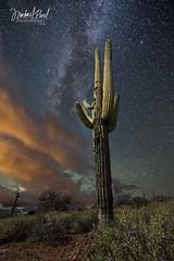 Night Watch (facebook.com/michaelpaulphotoworks) Tags: arizona cactus southwest west phoenix weather night stars landscape evening nightscape desert cloudy moonlight saguaro milkyway superstitionmountains saguarocactus