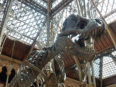 T Rex Skull (mikecogh) Tags: skull dinosaur fierce head teeth oxford bones trex tyrannosaurusrex pittriversmuseum