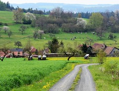 Back to Brden (:Linda:) Tags: germany landscape cow village path thuringia trail woodstack brden