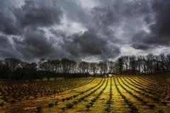 Kverneland (iban_g_g) Tags: lines norway clouds landscape norge nikon leading jren rogaland kverneland d7100