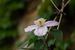 IMG_0488 (Nikan Likan) Tags: pink white paris green field vintage lens 50mm prime purple bokeh mount german m42 manual depth f28 own nicest schneider | xenar 2016 edixa i aesthetically kreuznarch