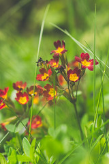 Flowers in the grass (Down_BSC) Tags: life summer flower green nature grass garden colorful