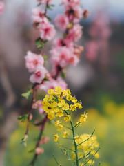 * (t*tomorrow) Tags: flower 85mm olympus omd  bbl em10
